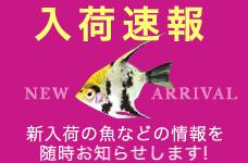 2019年1月25日ハワイ便入荷!!
