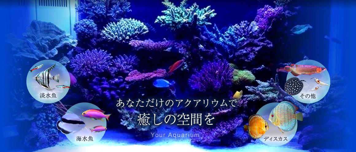 ショップ 熱帯魚 ペットワールド アミーゴ